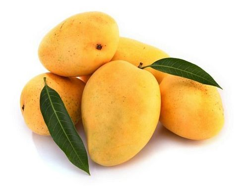 Indian Premium Quality Kesar Mangoes