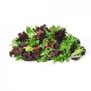 Romaine Lettuce Heritage Blend